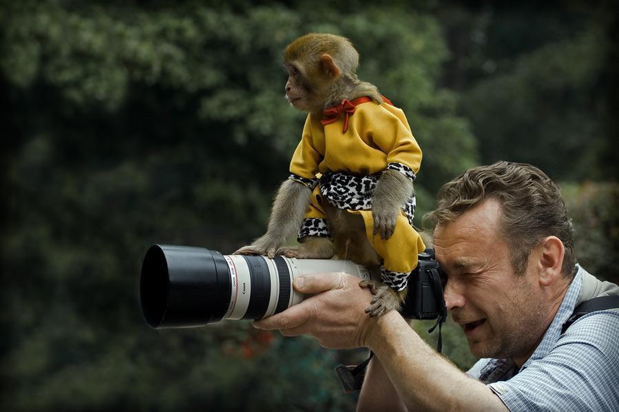 фото обезьянки