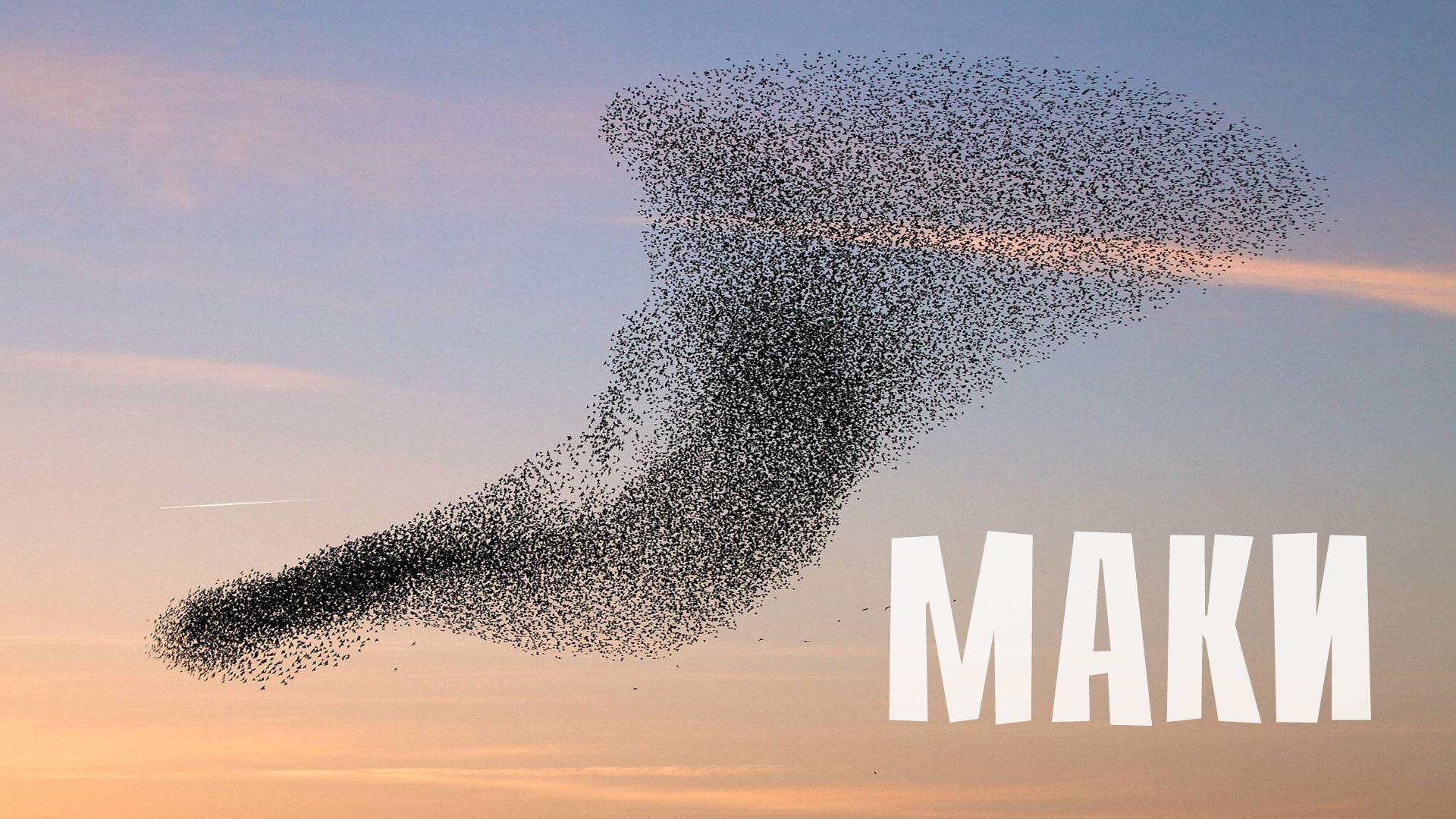 «Пролетая над гнездом кукушки» — несколько фактов о фильме столетия